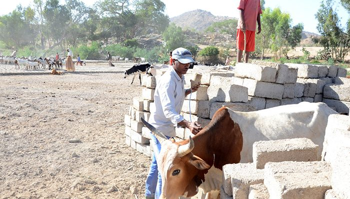 Untitled 6 3 Eritrea: Scientists Ponder tools in brucellosis fight